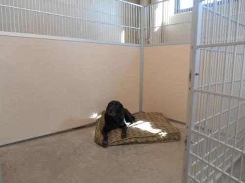 resize-Dog in Boarding Suite 001